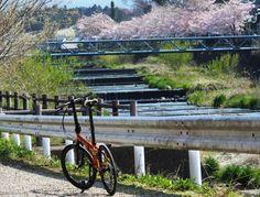 Copyright © DAHON担当営業Y / 2014 Speed Falco / (カメラ初心者のDAHON担当営業Yが)出張の合間に撮ってきました。 Photo Contest, Outdoor Furniture, Outdoor Decor, Bike, Park, Spring, Bicycle, Pageant Photography, Photography Challenge