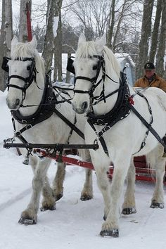 Horse Drawn Sleigh & Wagon Rides by Explore The Bruce, via Flickr