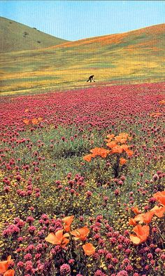 Fields of flowers :)