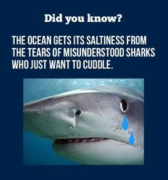 This is the best thing I've ever heard lol I Smile, Make Me Smile, Misunderstood Shark, It's Over Now, Haha, Shark Facts, Funny Quotes, Funny Memes, Jokes