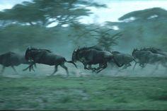 Serengeti National Park Migration