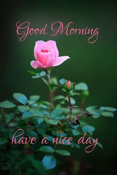Good Morning Images- Good morning images with quotes Good Morning Messages Friends, Good Morning Image Quotes, Morning Quotes Images, Good Morning Cards, Good Morning Texts, Good Morning Greetings, Good Morning Msg, Happy Morning, Good Night