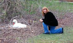 Sue with Lily the Swan who was sitting on her   eggs..