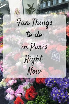 Fun Things to Do In
