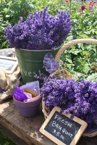 Hoping to visit Sequim again this year during the Lavender Festival!
