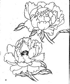 Peony Drawing, Floral Drawing, Asian Flowers, Oriental Flowers, Colorful Drawings, Easy Drawings, Asian Paints, Wood Burning Art, Drawing Lessons