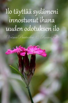 RunoTalon voimapuutarha: Voimaruno & voimakortit vko 46: Kukka