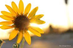 Yellow can make you smile