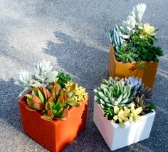 More succulents - in boxes