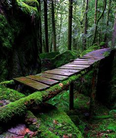 A forest bridge. Obsessed with nature and the forest. Photographie Portrait Inspiration, Nature Aesthetic, All Nature, Foto Art, Fantasy Landscape, Belle Photo, Garden Bridge, Beautiful Landscapes, Paths