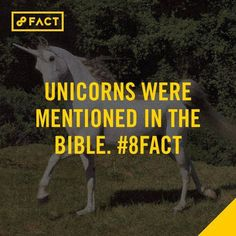 Just in case you didn't know 8 Facts, Wtf Fun Facts, True Facts, Funny Facts, Random Facts, Random Things, Good To Know, Did You Know, Real Unicorn