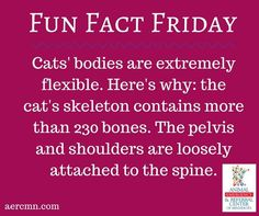 #FunFactFriday brought to you by Animal Emergency & Referral Center of Minnesota! #cats #catfacts #funfacts #animals #animalfacts #AERC
