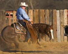 Smart Chic Olena: If you are gonna pick a horse pick a good one! Western Horse Tack, Western Riding, Western Saddles, Big Horses, Show Horses, Cowgirl Pictures, Cutting Horses, Faster Horses, American Quarter Horse