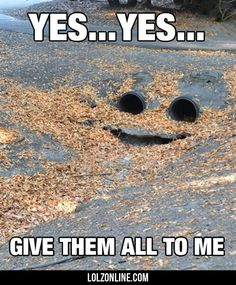 Yes... Yes... Give Them All To Me#funny #lol #lolzonline