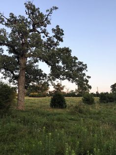 Cattle grazing, picturesque lush pasture. Some large trees, spring and creek. Seller is a licensed Arkansas Real Estate Agent in Mountain Home AR