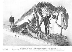#Allosaurus #dinosaur @Janet Russell-Snider Museum of Natural History