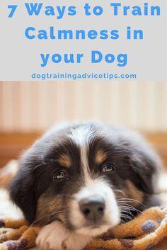 7 Ways to Train Calmness in your Dog | Dog Obedience Training | Dog Training Tips | Dog Training Ideas via @KaufmannsPuppy