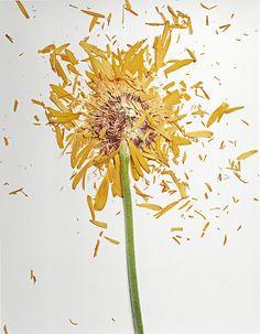 Broken Flowers by Jon Shierman