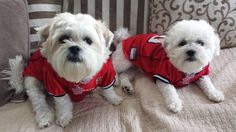 These two pups love the #Falcons  #RiseUp