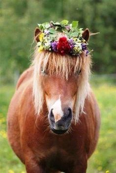 Horse and floral crown