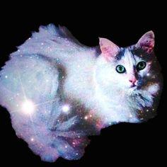 "The Meme Scene Includes ""Jurassic"" Kittens, Space Cats, and Vampire Felines | Catster"