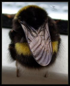 Anyone else like bumblebees? - #funny #gifs #viralvids #funnypics #cute more at: http://www.theviralmonster.com