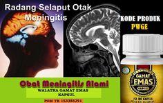 Selamat karena Anda telah temukan Obat Herbal Radang Selaput Otak Terbaik dengan mengkonsumsi Walatra Gamat Emas Kapsul yang telah terbukti paling ampuh dan terpercaya mampu mengobati radang selaput otak tanpa efek samping dan aman tanpa ketergantungan. Herbalism, Website, Herbal Medicine