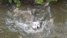 Katia Verza: LE VOSTRE DOMANDE: Sono in possesso di un cane par...
