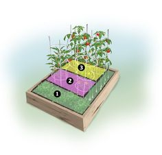 Plant this Salsa Garden Plan in a 4 x 4 raised bed or in-ground garden. Grow the ingredients for homemade salsa in your very own Salsa Garden! The plan includes tomatoes, peppers, onions, and herbs.