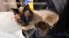 Prepare and Pack Your Cat's Travel Necessities! @easyologypets