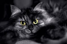 Is Halloween Dangerous For Black Cats? | Cats and Meows