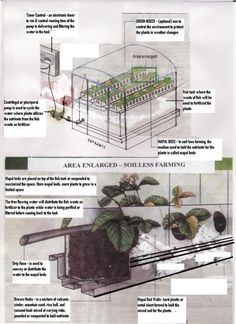 Aquaponics fish are the heart and soul of an aquaponics system. Description from aquaponicsfish.landscapeideasandpicture.com. I searched for this on bing.com/images
