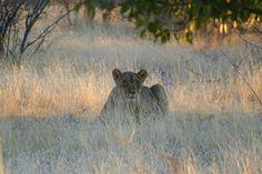 Nambia   Endless Wildlife