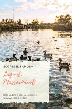 Scopri il Lago di Massaciuccoli in Toscana. Un'oasi vicina a Pisa e a Lucca. Piena di flora e di fauna. Un posto perfetto per una gita nella bella Toscana. #toscana #lagomassaciuccoli #massaciuccoli #toscanadavedere #toscanaitalia
