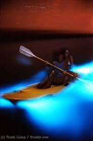 Bildergebnis für dinoflagellaten leuchten