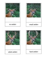 Free Montessori cards for the deer antler cycle