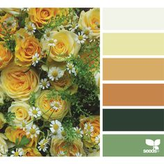 design seeds | search | for all who ♥ color ❤ liked on Polyvore featuring backgrounds, design seeds, color pallet, flowers and paint cards