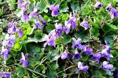 Jak využívat kalendář ke sběru bylin   kdy sbírat léčivé bylinky Korn, Life Is Good, Herbalism, Herbs, Health, Flowers, Nature, Plants, Gardening