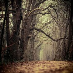 Autumn / spooky Halloween forest