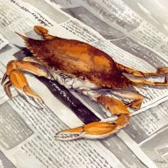 Chesapeake Bay Steamed Crab by Trevor Lewis Steamed Crabs, Chesapeake Bay, Paintings For Sale, Trout, Portrait, Headshot Photography, Brown Trout, Portrait Paintings, Drawings