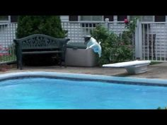 Jack Russell Terrier jumping in the pool