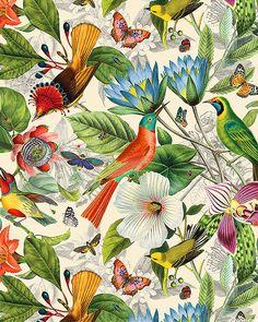 Tropical Art, Tropical Flowers, Pattern Art, Pattern Design, Shadow Art, Exotic Birds, Fabric Wallpaper, Botanical Art, Bird Art