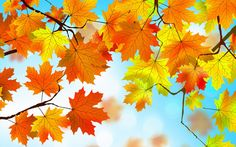 autumn leaves hd HD Background
