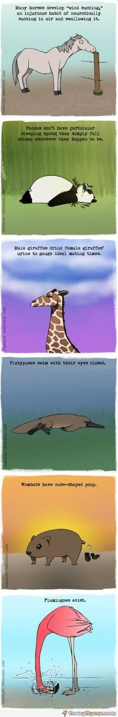 Weird facts about animals!!