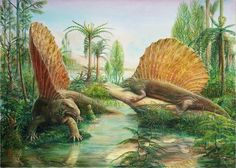 Edaphosaurus is a genus of extinct edaphosaurid synapsid that lived around 303 to 275 million years ago, during the late Carboniferous to early Permian periods.