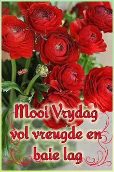 Lekker Dag, Afrikaanse Quotes, Goeie Nag, Goeie More, Morning Blessings, Prayer Quotes, Day Wishes, Good Morning Quotes, Christmas Wreaths