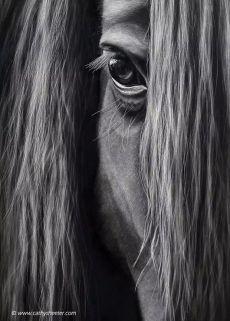 """Zen"" ~ x ~ Scratchboard Most Beautiful Horses, All The Pretty Horses, Black Horses, Wild Horses, Horse Photos, Horse Pictures, Horse Mane, Horse Wallpaper, Majestic Horse"