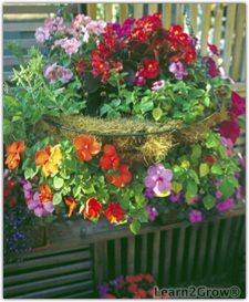 hanging planters for shade - Bing Images Full Sun Planters, Planters For Shade, Hanging Baskets, Hanging Planters, Shade Flowers, Rose Bush, Outside Living, Front Yard Landscaping, Shade Garden