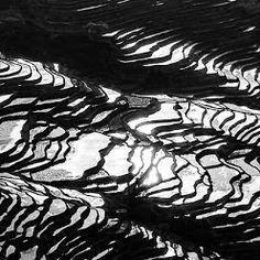 Yuanyang Rice Terrace Black    I rendered couple of Yuanyang rice terrace water reflection images shot during earlier workshops, into black and white, they are more graphically engaging and intensive than the color version. I just like to play with them, the results can be interesting and awarding.    #blackandwhitephotography  #chinatravel  #travelphotography  #photoworkshops