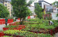 Verschiedene Pflanzen wachsen im Prinzessinnengarten am Moritzplatz in...